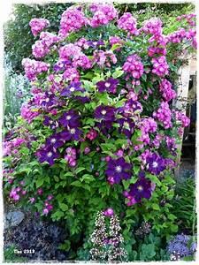 Welche Pflanzen Passen Zu Rosen : welche pflanzen passen zu welche pflanzen passen zu rosen ~ Lizthompson.info Haus und Dekorationen