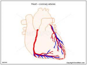 Heart Coronary Artery Diagram