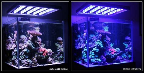 aquarium eau douce eclairage