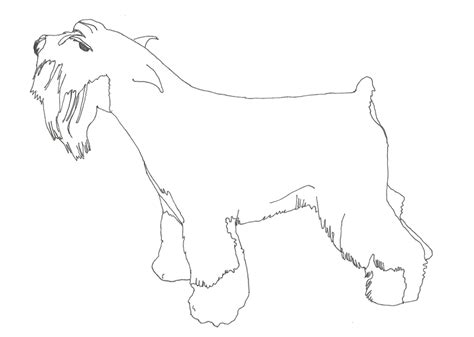 Free Schnauzer Dogs Coloring Pages