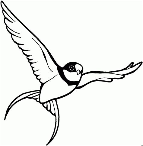 vogel malvorlagen kostenlos zum ausdrucken ausmalbilder