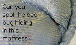 bed bugs hide in vacuum cleaners thrasher termite pest With can u see bed bugs on your bed