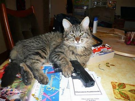 gatos armados