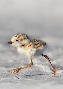 Cute baby bird | Animals | Pinterest