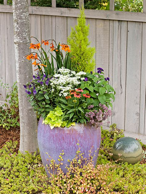potted trees for patio caring for potted plants 4373