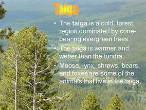 Life In The Taiga : objective describe and compare several common ecosystems communities of organisms and ~ Frokenaadalensverden.com Haus und Dekorationen