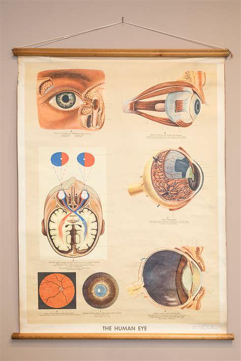 eye antiques give optometry alumnas modern practice