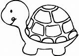 Coloring Turtle Pages Pet Pets sketch template
