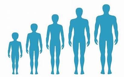 Growth Age Adult Boy Proportions Aging Illustration