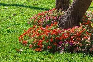 Kokoserde Für Welche Pflanzen : bepflanzung unter b umen diese pflanzen kommen infrage ~ Orissabook.com Haus und Dekorationen