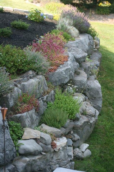 pflanzen für steinmauer steingartenpflanzen unsere 6 favoriten machen die felsige landschaft bunt h 252 gelbeete