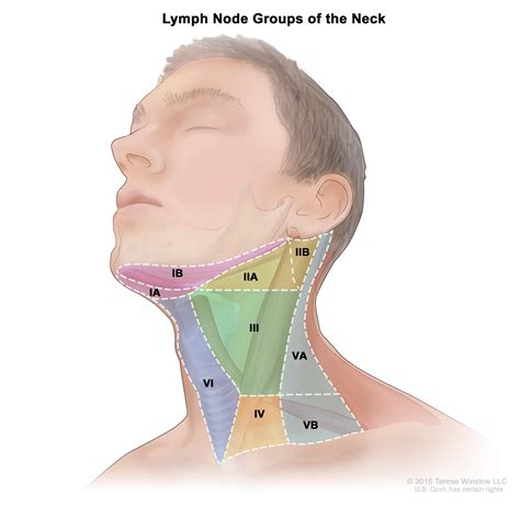 Oropharyngeal Cancer Treatment Pdqhealth Professional