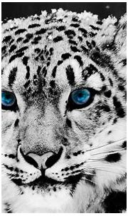 10 Best Wallpapers Of White Tigers FULL HD 1920×1080 For ...