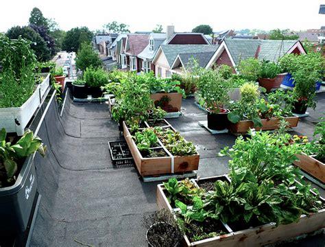 rooftop veggie garden hidropon 205 a una excelente alternativa para la agricultura sustentable hidroponia mx