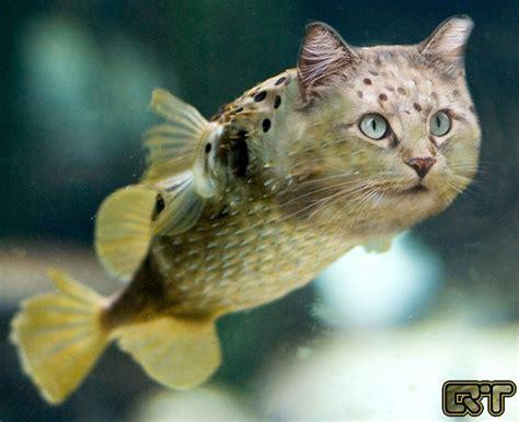 fish for cats catfish fishcat i dunno quebectango digital