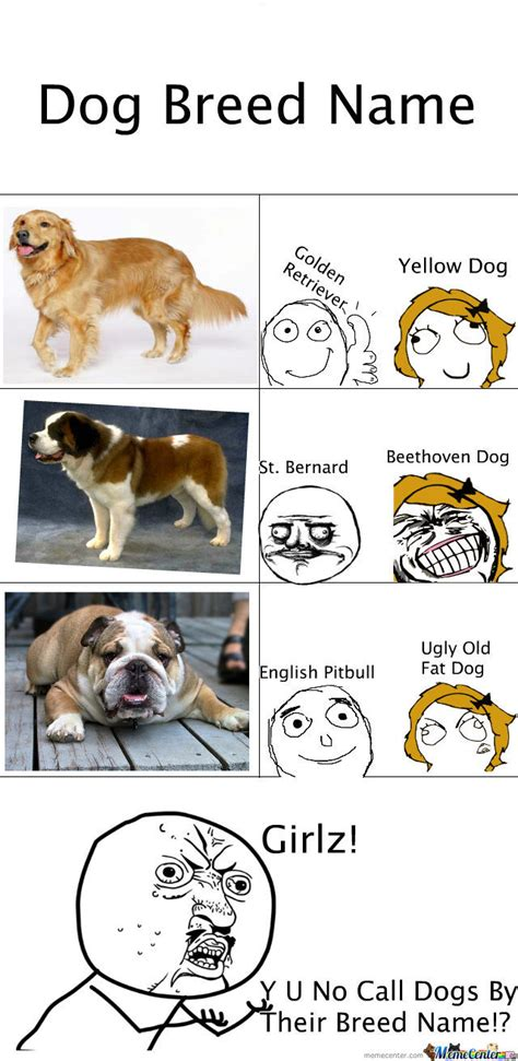 What Breed Is Doge Meme - dog breeds by victhetwinkie meme center