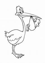 Stork Coloring Pages Coloringtop sketch template