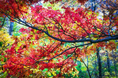 fall foliage great smoky mountains painted photograph