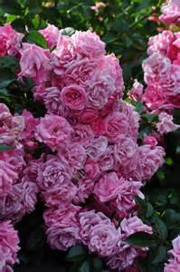 Rose Garden Focal Point