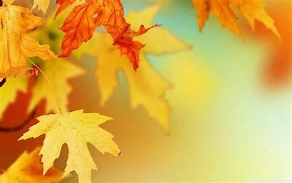 Leaves Autumn Wallpapers Fall Leaf Desktop Foliage