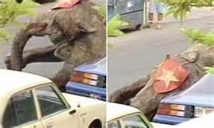 peta releases video  circus elephant   shot dead
