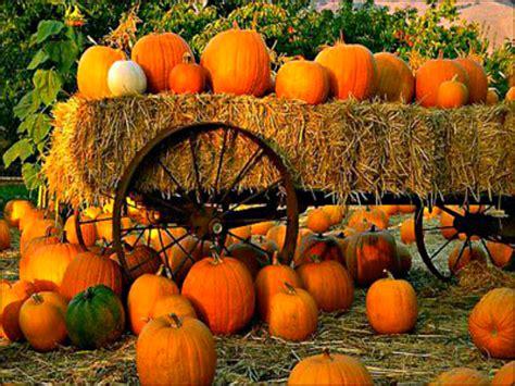 Autumn Pumpkin Wallpaper by 37 Autumn Pumpkin Wallpaper On Wallpapersafari