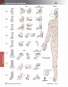 Muscle Manual Anatomy Workbook