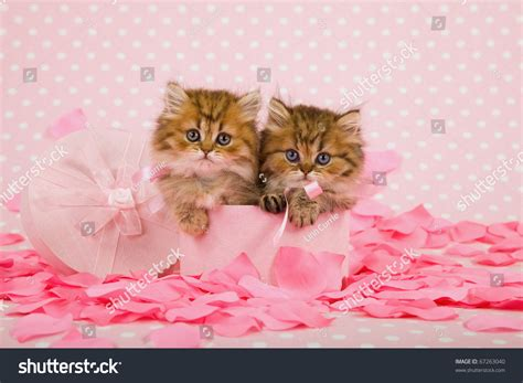 List of Synonyms and Antonyms of the Word: kittens are pink