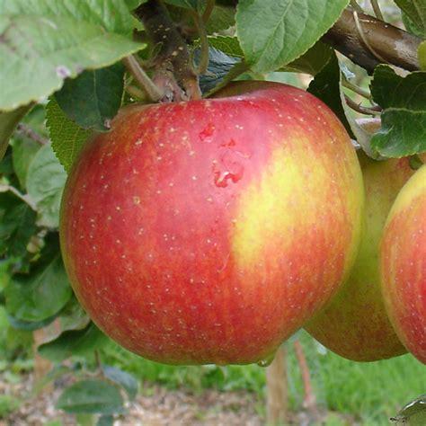 Miete Für Den Herz Apfel Garten Für 3 Apfel Berlepsch Der Herzapfelhof Im Alten Land