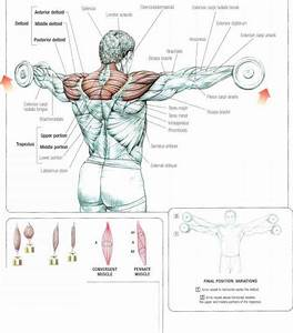 Image Gallery lateral raises muscles worked