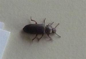 Ungeziefer Wohnung Kleine Braune Käfer : k fer k che ~ Lizthompson.info Haus und Dekorationen