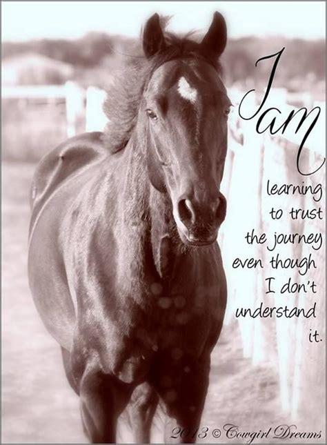 trust horse quotes quotesgram