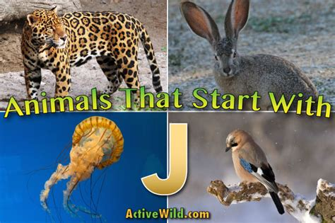name an animal that starts with the letter n animals that start with j list of amazing animals 49694