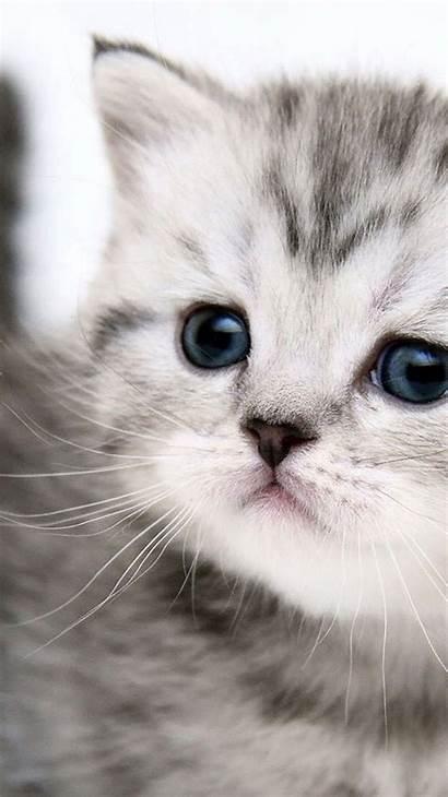 Cat Iphone Wallpapers Desktop Backgrounds Plus