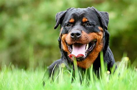 elektrohalsbaender und spruehhalsbaender fuer hunde