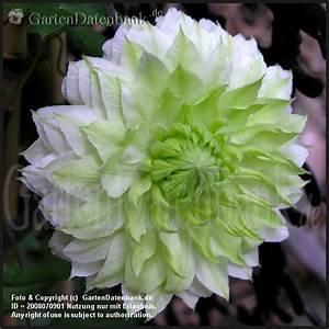 Blumenarten Az Mit Bild : gr ne blumen gr ne bl ten impressionen fotos bilder ~ Whattoseeinmadrid.com Haus und Dekorationen