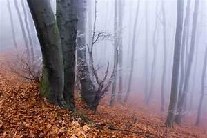 Rain Light Free Picture Wood Fog Landscape Nature Mist Dawn