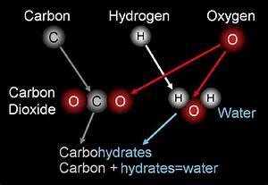 sci9bestq3bm - Carbohydrate