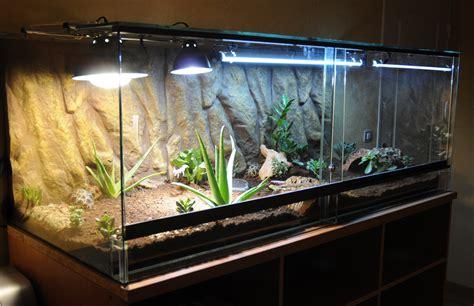 plante pour terrarium tortue de terre