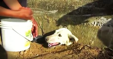 dog   head stuck   wall   nail bitting rescue