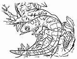 Gecko Coloring Printable Lizard Craft Reptiles Animal Unique Printables Museprintables sketch template