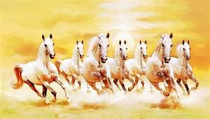 7 White Horse Images Hd | Wallpaper Images