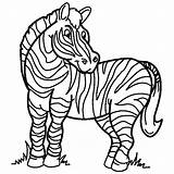 Coloring Zebra Pages Sheets Animal sketch template