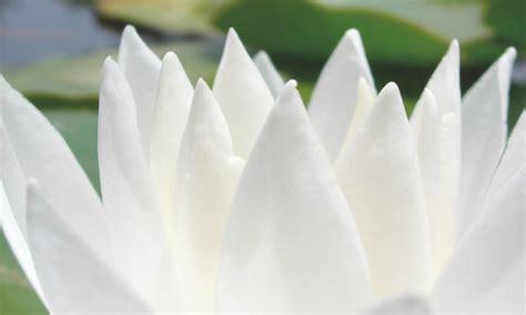 Die Farbe Weiß by Wei 223 Ist Die Hellste Farbe