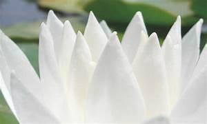 Farbe Weiss Oder Weiß : wei ist die hellste farbe ~ Orissabook.com Haus und Dekorationen