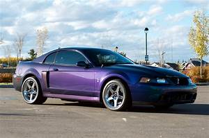 2004 Ford SVT Cobra - $30000 - Canadian Mustang Owners Club - Ford Mustang Forums