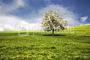 Rosa Blühender Baum Im Frühling : kostenloses foto bl hender baum im fr hling ~ Lizthompson.info Haus und Dekorationen