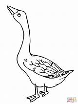 Goose Coloring Pages Geese Printable Web Embroidery Canada Flock Outline Charlottes Birds Duck Cartoon Drawing Bird Stitch Animal Cross Program sketch template