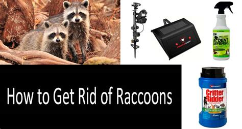 rid  raccoons   ways  top  products