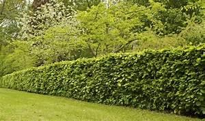 Quel Arbre Planter Près D Une Maison : quel arbre planter devant une maison bricolage maison et ~ Dode.kayakingforconservation.com Idées de Décoration